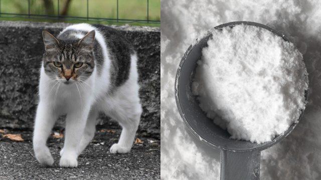 kucing-penyelundup-narkoba-kabur-dari-penjara-isolasi-di-sri-lanka