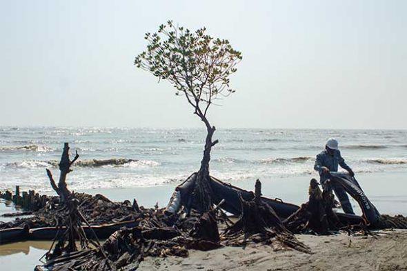 warga-mauritius-sumbangkan-rambut-untuk-bersihkan-minyak-tumpah