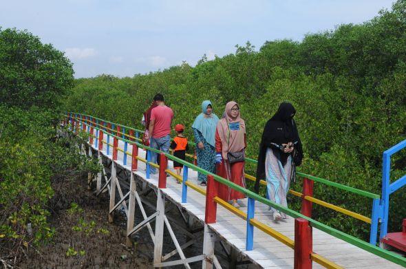 pengembangan-ekowisata-mangrove-sicanang-akan-digenjot