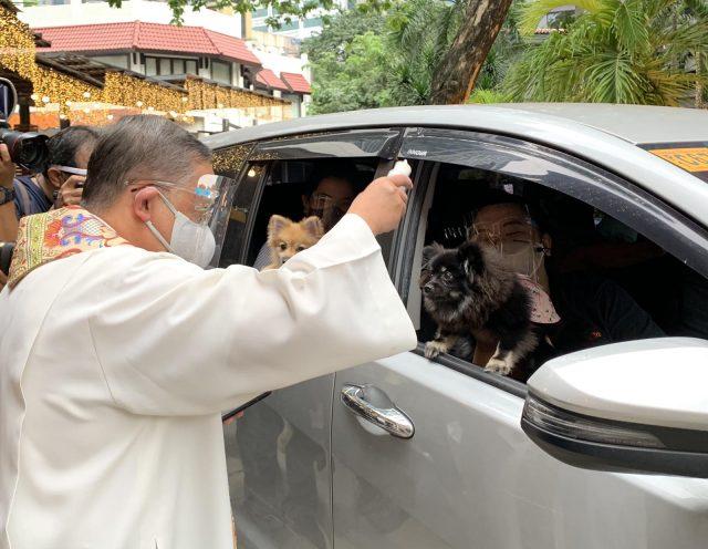 karena-pandemi,-gereja-di-filipina-bikin-pemberkatan-buat-hewan-secara-drive-through