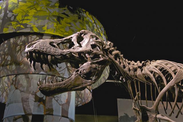 pecahkan-rekor-lelang,-kerangka-t-rex-laku-rp467-miliar