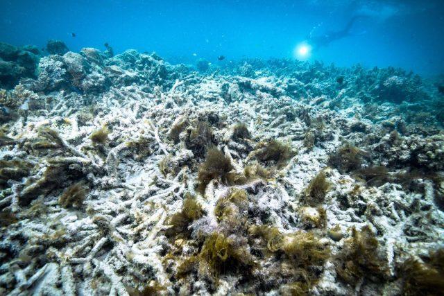 separuh-kawasan-terumbu-karang-terbesar-dunia-mati-karena-ulah-manusia