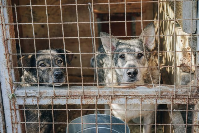 aktivis-ungkap-rumah-lelang-di-korsel-yang-sekap-200-an-anjing-untuk-dikonsumsi