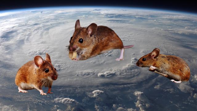 jepang-sukses-kirim-tikus-ke-luar-angkasa-untuk-uji-coba-memperlambat-penuaan