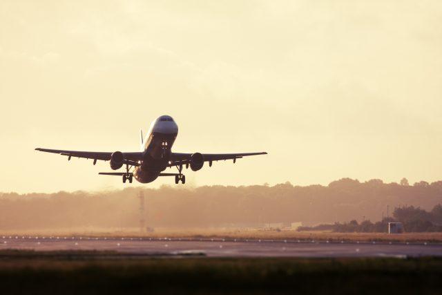 menurut-peneliti,-tawon-bisa-mengancam-industri-penerbangan-internasional