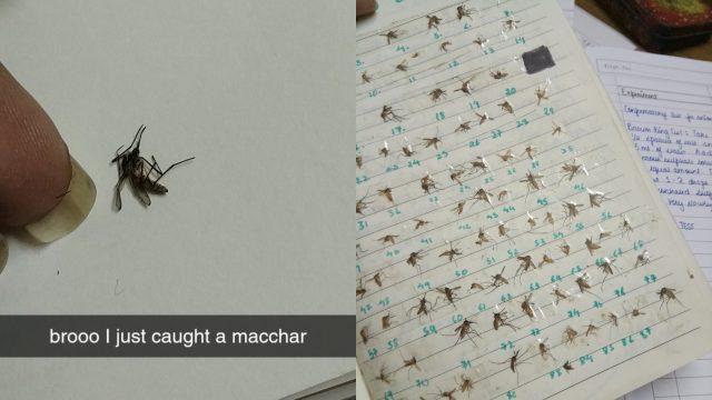 perempuan-india-ini-punya-hobi-unik:-koleksi-semua-nyamuk-yang-dia-bunuh