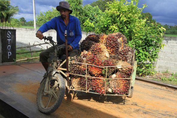 maret-2021,-harga-referensi-cpo-naik-dan-biji-kakao-turun