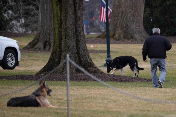 anjing-peliharaan-presiden-as-serang-anggota-dinas-rahasia