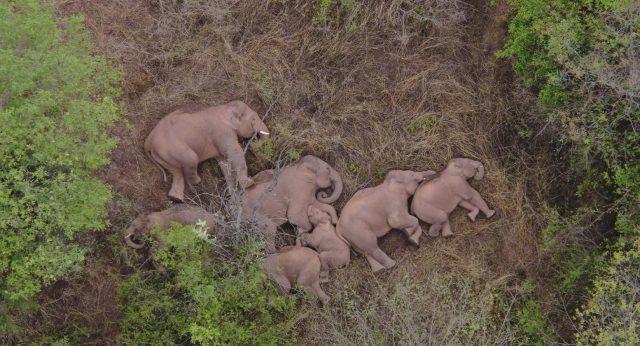 netizen-sedunia-terpukau-pada-perjalanan-keluarga-gajah-yang-tersesat-di-tiongkok