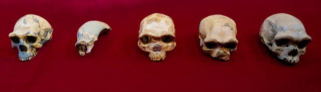 tengkorak-'manusia-naga'-ditemukan-di-tiongkok,-diyakini-kerabat-dekat-manusia