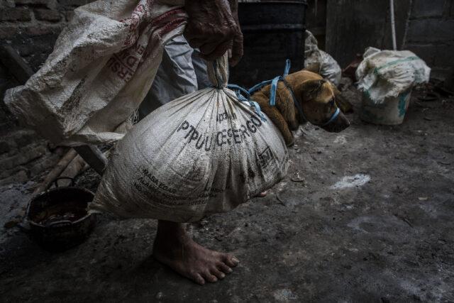 kulonprogo-jadi-daerah-pertama-di-indonesia-yang-sidangkan-perdagangan-anjing